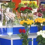 Дизайн-проект цветочного магазина